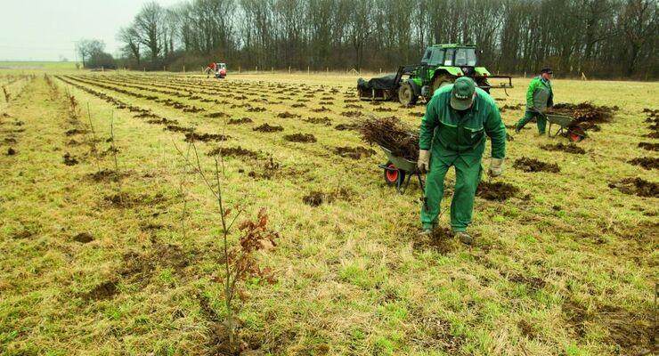 Volkswagen pflanzt neuen Wald in Essenrode bei Wolfsburg an und treibt damit die Rekultivierung des Gebietes weiter voran