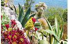 Das mild-feuchte Klima fördert eine erstaunlich mediterrane Vegetation.