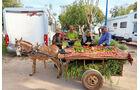 Die marokkanischen Bauern setzen auf den Direktverkauf.