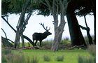Reise-Tipp: Lothringen, Tierpark