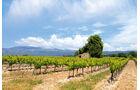 Weingärten im Tiefland